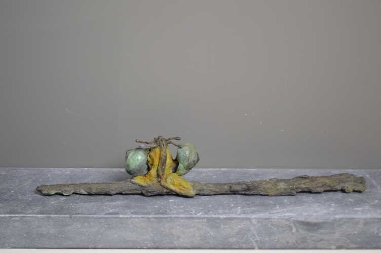 Slakken op boomschors, unicum