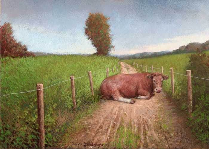 Koe in de weg