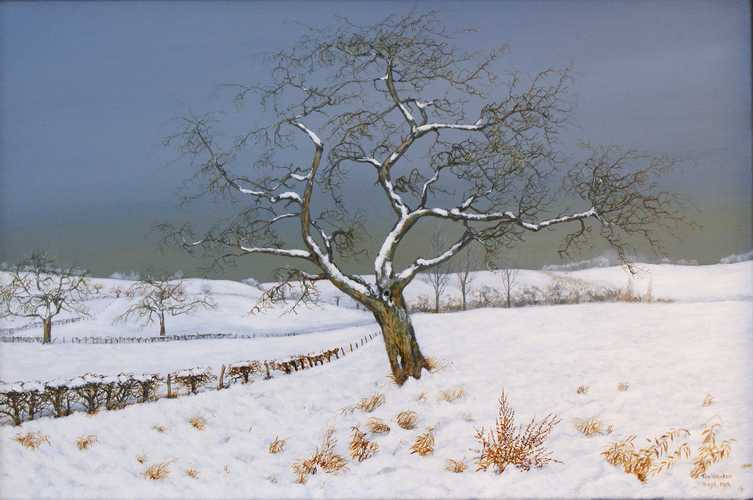 Appelboom in de winter
